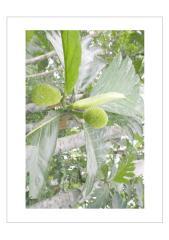 موسوعة النباتات الطبية و النباتات السامة و المسرطنةa.pdf